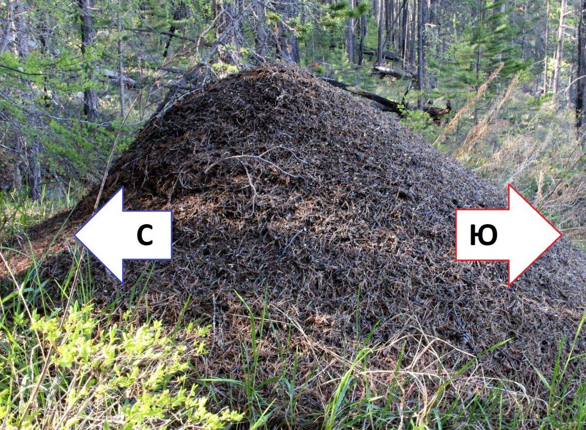 Ориентирование по муравейнику